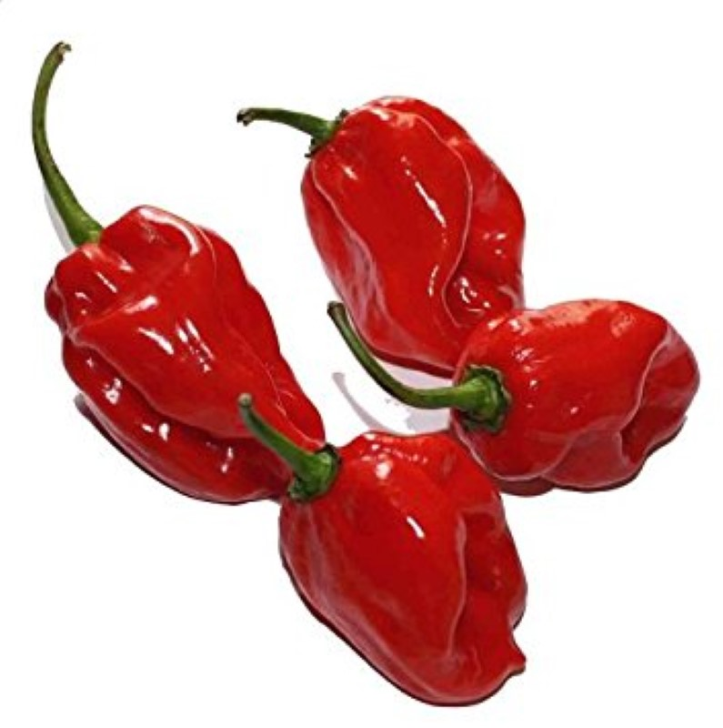 Čili HABANERO RED