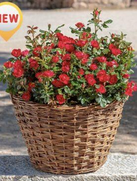 Vrtnica 'Zepeti'®
