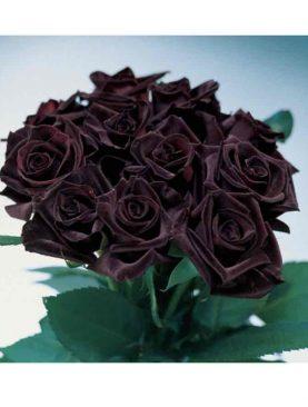 Vrtnica Black Baccara® (čajevka)